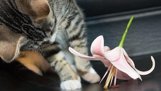 katten en yoghurt